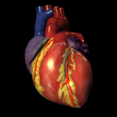 صوره قلب انسان حقيقي بالصور