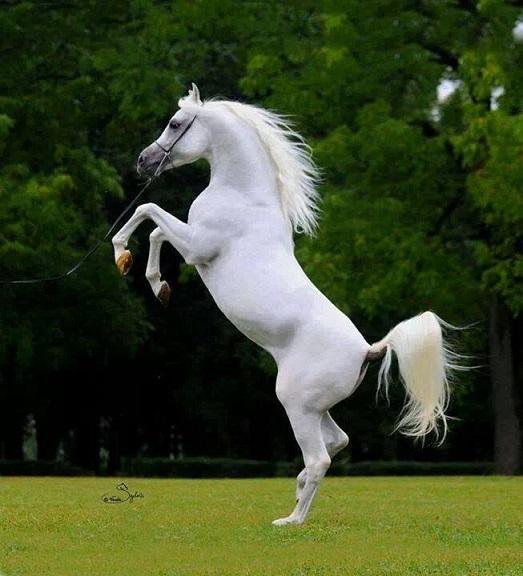 بالصور صور خيول اصيلة بالوان جميله bc99c4026e5405de1006baa4e5da43c0
