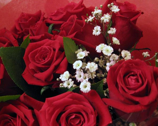 بالصور احلى واجمل باقه زهور c02a4f1b66d75031bc6d944bc82ae732