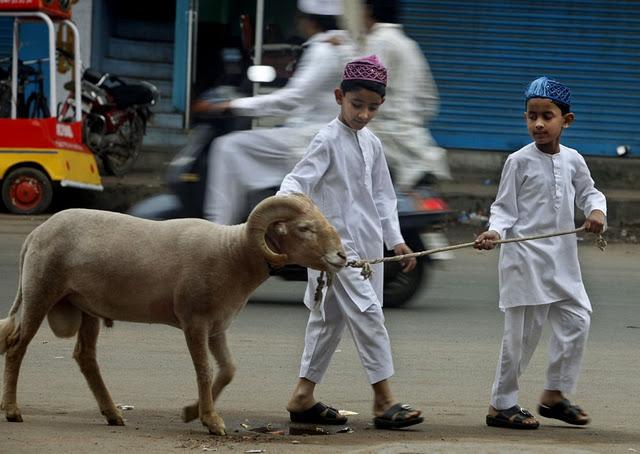 صوره تعلم طريقة الذبح الاسلامي الصحيح