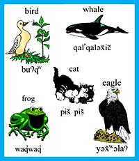 صوره اسماء جميع الحيوانات بالفرنسيةوترجمتها