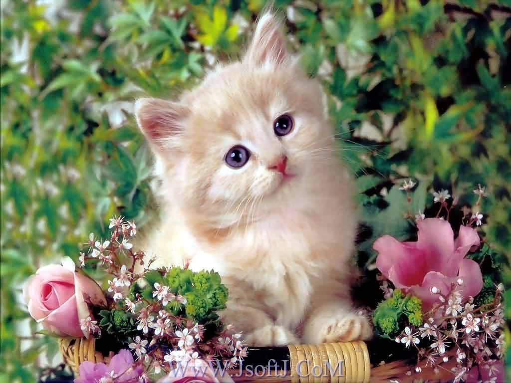 بالصور صور قطط جميلة كيوت c6ef4bd0f273dc67465e928900a2984b
