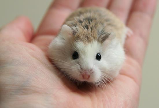 صوره صورة جميله حيوان همتارو