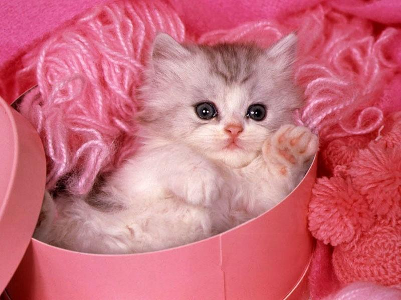 صور اجمل واحلى صور خلفيات قطط فى العالم