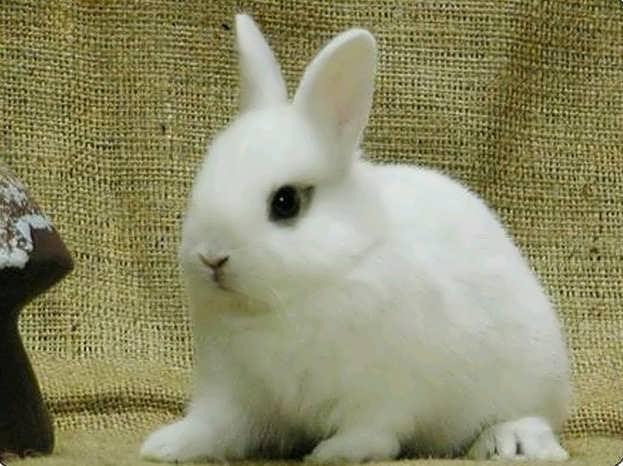 بالصور اجمل صور ارانب صغيرة وجميلة d8f625e2ea265c3d4b22cd0b4cd218e8