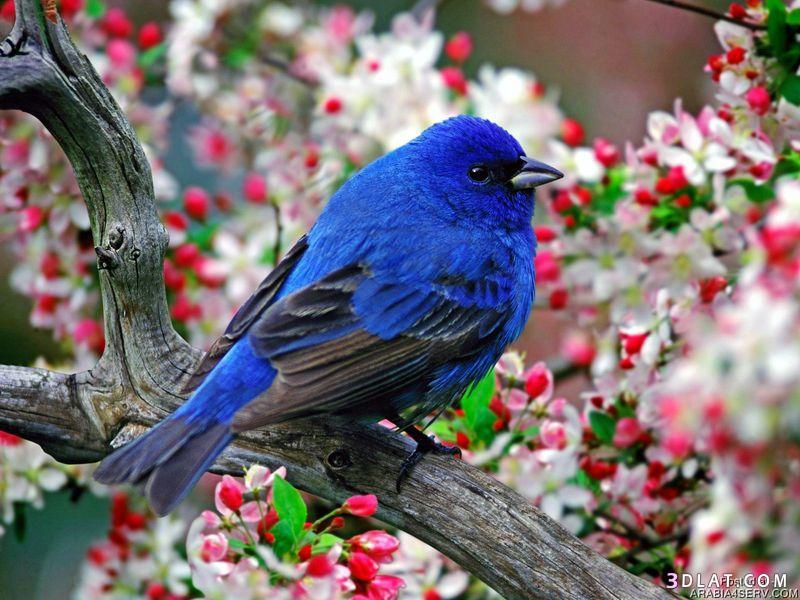 اجمل صور الطيور  صور طيور جميله