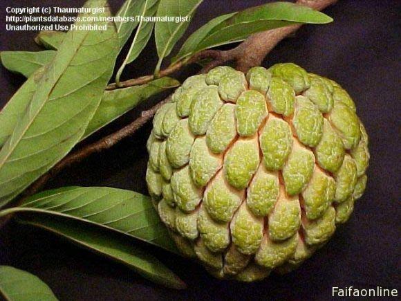 صوره ما هى فوائد فاكهة القشطه