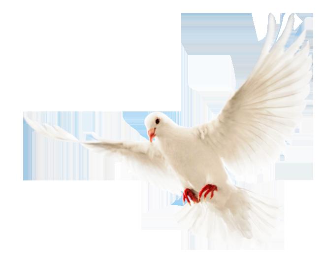 بالصور صور طيور بيضاء متحركة e35145754c18c8af2e92822968f5837e