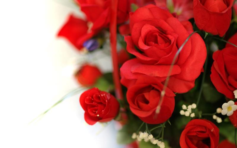 صوره اجمل صور وردة حمراء