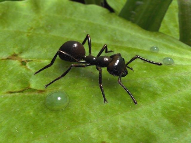 صوره اعجاز علمي عن النمل