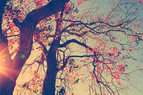 صوره معنى الاشجار في المنام