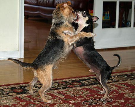صوره كلمات امثلة عن الكلاب