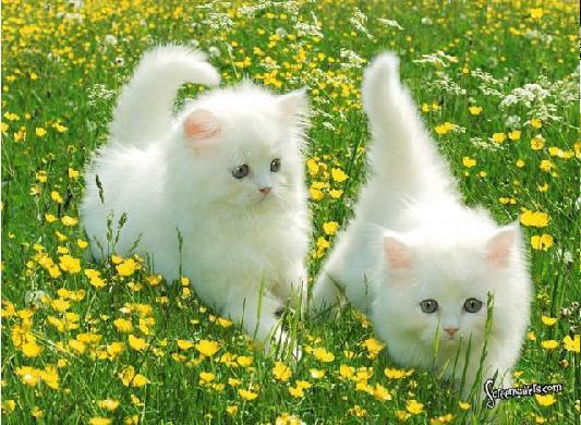 صوره صور حيوانات رقيقه جميلة جدا