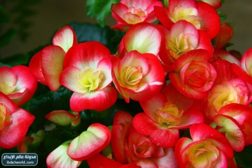 بالصور صور زهور جميلة وملونة bb7a016d521a7ad3bd73c1a61efbe13a