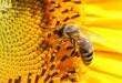 صوره تفسير رؤية النحل في المنام
