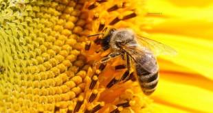 صورة تفسير رؤية النحل في المنام , حشرات لادغة لها منفعة في الاحلام