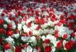 صور انواع الزهور ومعلومات عنها