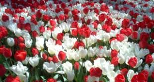 صورة انواع الزهور ومعلومات عنها , الورد لغة المتحابين اعرف اكتر عنهم