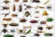 صور تفسير حلم رؤية الصراصير والحشرات في المنام لابن سيرين