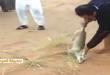 بالصور صاحب فيديو تعذيب ثعلب 8990900900090000 110x75