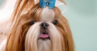 صور صور لكلاب جديدة لمحبى اقتناء الكلاب