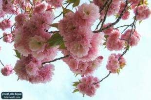 صوره صور زهور جميلة وملونة