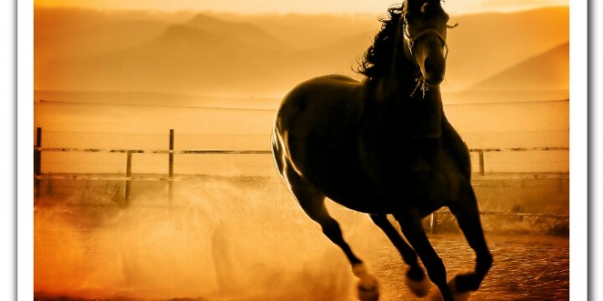 بالصور افضل صور لخيول جميلة attachment.php 660x330