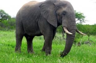صوره تفسير رؤية الفيل في المنام