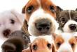 بالصور تفسير حلم الكلاب تطاردني ff9930 110x75