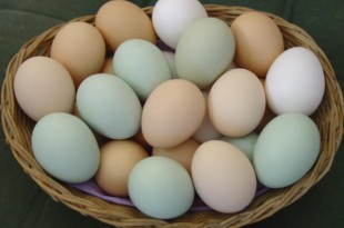 صوره اهم فوائد البيض للجسم
