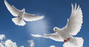 صوره تعريف السلام واهميته وادابه