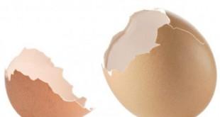 بالصور فوائد قشر البيض للجسم صوره هل تعلم ماهي r.png 310x165