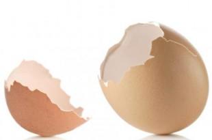 صوره فوائد قشر البيض للجسم