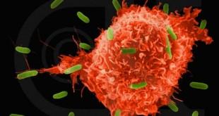 السرطان وخطورته الكاملة اللي محدش يعرفها , بحث علمي حول السرطان