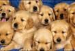 بالصور تفسير الاحلام الكلب 11285 110x75