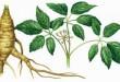 صور اعشاب طبية لتقوية الذاكرة
