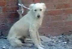 صور كلاب رومي صغيرة كيوت