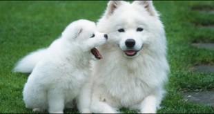 صور تفسير احلام كلب ابيض