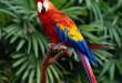 بالصور جميع انواع طيور الببغاء 22365 1261964009 110x75