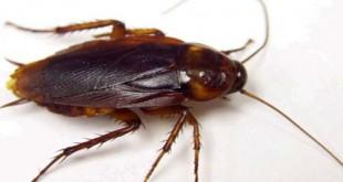 صورة تفسير رؤية الحشرات الزاحفة في المنام لابن سيرين