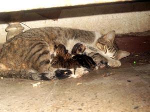 صورة اسئله عن ولادة القطط