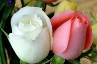 صوره صور زهور وورود منوعة