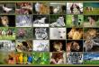 صور معلومات غريبة عن الحيوانات