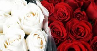 بالصور اجمل واروع صور الورود 5129188db62905bfd977714995eee84e 310x165