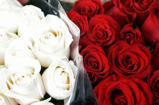 صوره اجمل واروع صور الورود