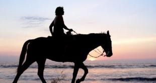 صوره تفسير ركوب الحصان في المنام