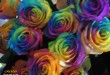 بالصور معاني الوان الورود كلها 666441837 110x75
