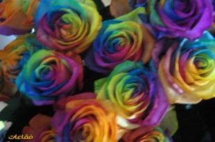 صوره معاني الوان الورود كلها