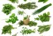 بالصور اهم الاعشاب من حولنا وفوائدها 7 أعشاب طبيعية لا تستغني عنها 2 110x75