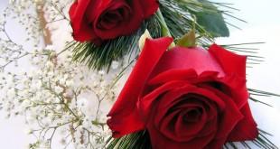 خلفية ورود وصو زهور جميلة